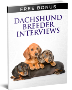 dachshund breeder interviews