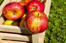 apple_cores